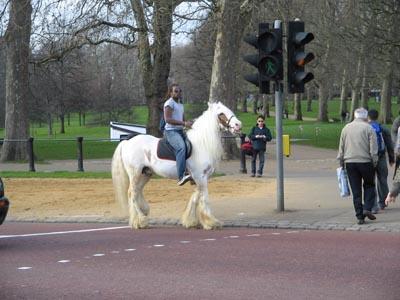 horse guy